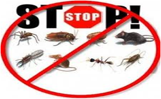 Signs That a Property Has a Pest Infestation